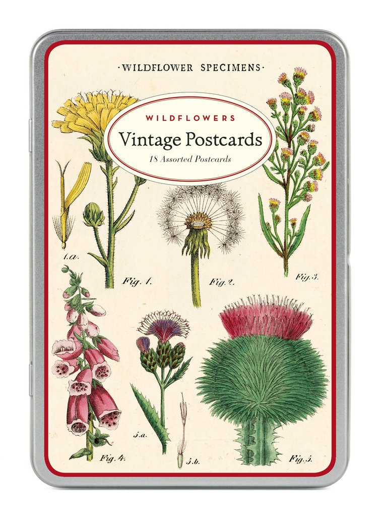 Image For Cavillini & Co. Vintage Postcards-Wildflowers